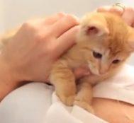 Bir Kedi Maması Markası Baba Kedinin Ağzıyla Yavru Kediye Tavsiyeler Veriyor.. Kedi Sahipleri Mutlaka İzleyin!