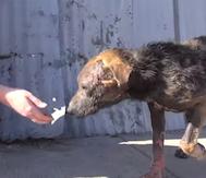 Sokakta Dövülen ve Ölüme Terkedilen Bu Köpeğe Önce Çok Üzüleceksiniz.. Sonra ise Hala İyi İnsanlar Olduğuna Şükredeceksiniz!