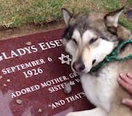 Sahibinin Mezarı Başında Hıçkıra Hıçkıra Ağlayan Bu Köpek, Merhamet ve Sadakat Konusunda Ders Veriyor