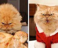 15 Fotoğrafla Dünyanın En Asabi Kedisi Garfi
