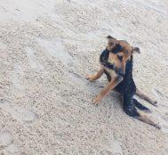 Tayland'da Arka Bacakları Felçli Olarak Kanadalı Bir Turist Tarafından Bulunan Köpeğin Hikayesi