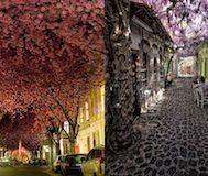 Yollarının Ağaç ve Çiçeklerle Gölgelendiği Birbirinden Muhteşem 15 Cadde