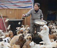 Her Sabah Saat 4'te Güne Başlayan Bu Çinli Kadınlar 1300 Sokak Köpeğini Elleriyle Besliyor