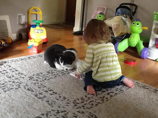 7-eklem-kedi