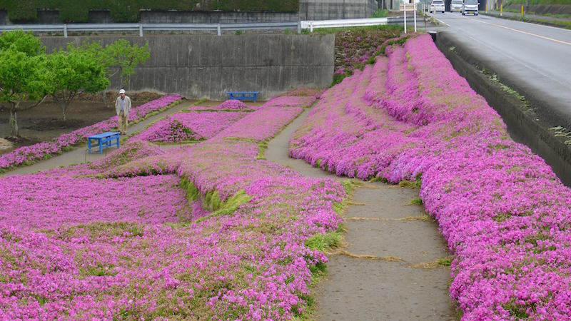 4-japonya-cicek-bahcesi