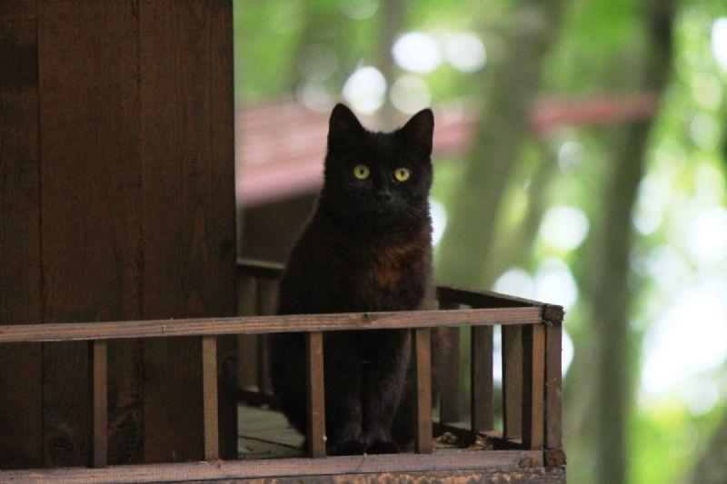 kedi-kasabasi-4