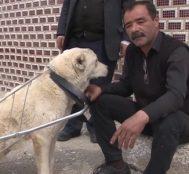 Engelli Köpeğe Pazar Arabasından Yürüteç Yapan Kırıkkaleli Adamın İç Isıtan Röportajı