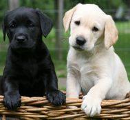 Köpek Cinsleri: Ailelere İdeal Evde Bakılabilecek En Dost 10 Köpek Türü