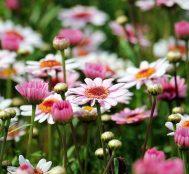 Bu Sevgililer Gününde Sevgilinize Hediye Edebileceğiniz 9 Çiçek ve Anlamları